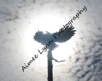 Eagle in the Sun - Fine Art Photography