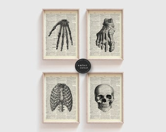 Skeleton 4 Print Set, Antique Anatomy, Book Print Set, Skeleton Diagram, Human Bones, Bone Art Print, Skeleton Wall Art, Print Set, Unframed