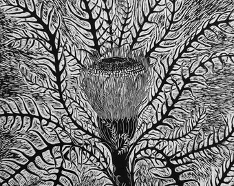 Large hand pulled woodcut print 'Banksia'