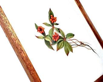 Vintage Framed Bunchberry Print, Wood Framed Bunchberry Print, Cornus Canadensis Print, Framed Dogwood Print, Red Berry Botanical Print