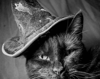 Halloween black cat hat real photo*Quilt, art fabric block