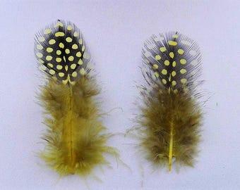 lot de 50 plumes à pois jaune