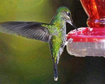 hummingbird, hummingbird at feeder, birds, hummingbirds, hummingbird feeder, hummingbird print, Costa Rica, bird feeder, hummingbird photo