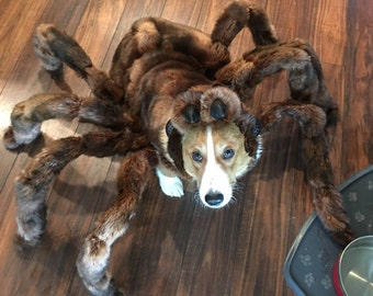 High Quality Medium Tarantula Costume by Cozy Pawz * (Skeletons not included!) & Spider costume | Etsy