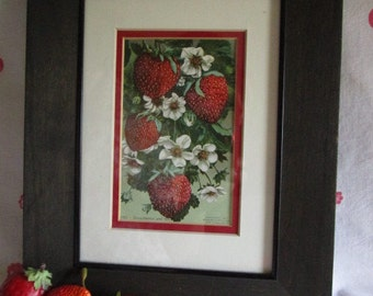 Strawberries and Blossoms Matted and Framed Litho Print  Under Glass   Edward Mitchell