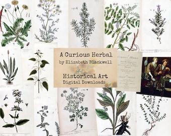 A Curious Herbal - Digital Ephemera, Digital Images, Vintage Art, Instant Download, Digital Paper, Digital Collage, Historical Images