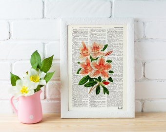 Pink Rhododendron flowers printed on  Dictionary or Encyclopedia Page BFL079