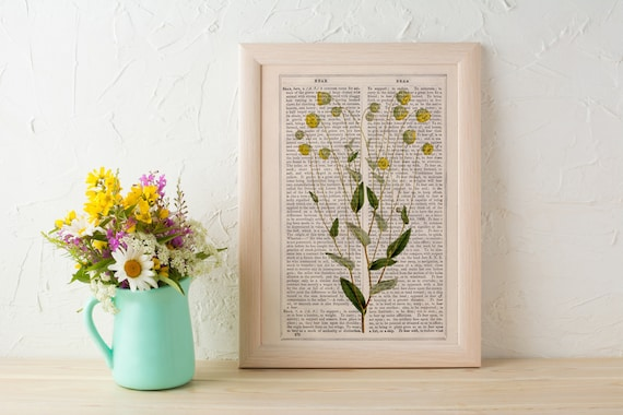 Wild flowers collection Print on Vintage Dictionary Book page, Camomile  Wild flora art, Wall art naturalist illustration  BFL220