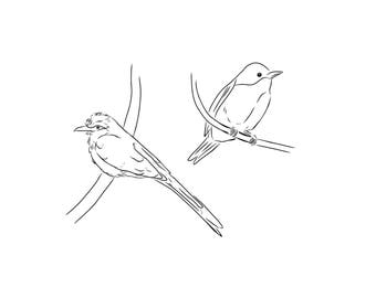 Bird Line Drawing Giclée Print / Line Drawing / Simple Art / Valentines / For Her / Ink /Home Decor / Animal Lover /Art