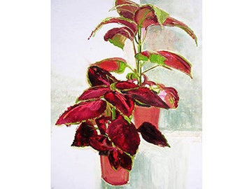 Red Coleus Card/Print Oil Painting