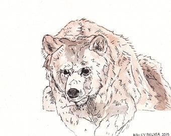 Grizzly Bear Digital Print by Hailey Belyea