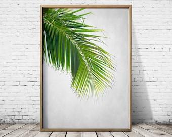 Tropical leaf Print Photography Palm Tree Wall Art Palm Tree Print Palm Tree Art Tropical Print Tropical Wall Art Tropical Art Print