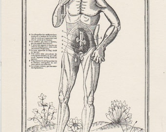 """Medical print , ready to frame , Charles Estienne  """" De dissectione"""" 1546"""