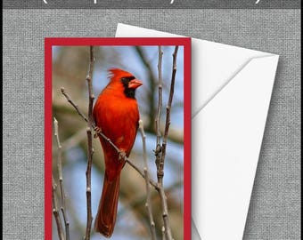 All Occasions Greeting Card Printable Greeting Card Instant Download Bird Watchers  Nature Lovers Cardinal Bird Lovers  Birthday Greetings