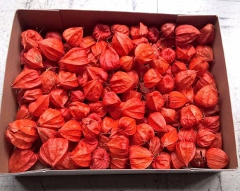 WHOLESALE 100 x Dried Loose Physalis - Dried Chinese Lantern Pods