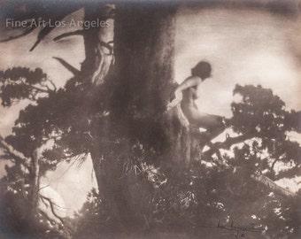 """Anne Brigman Photo """"The Pine Spite"""" 1907"""