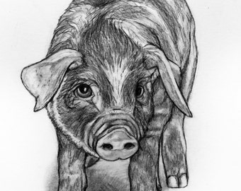 Original Pencil Drawing - Piglet 26