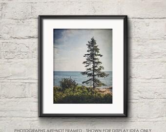 Nature Photography, Landscape Photograph, Woods Woodland, Ocean Photograph, Dark Moody, Fall, Pine Tree, Acadia Park, Maine Coast