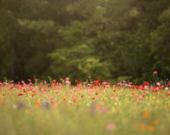 Spring backdrop, Summer Digital Backdrop, Digital Background, Flower Fields, Creamy Backdrop, Photoshop, PSE - Instant Download