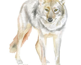 Coyote Watercolor Painting 8.5 x 11 Fine Art Giclee Reproduction - Woodland Animal Texas Art Print 8x10