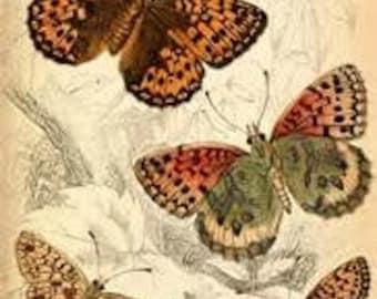 Vintage Butterflies Cross Stitch Pattern PDF