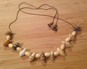 Natural beach shells beauty