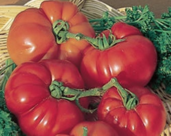 Super Marmande Tomato seeds