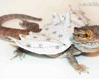 Dragon wings, Bearded dragon clothes