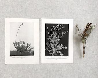 Vintage Botanical Print Set 1930s Herbarium Plant Print Nature Garden Flower Floral Ephemera Journal Scrapbook Vintage Ephemera Kit Supplies