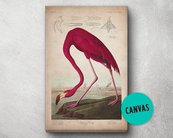 Flamingo Print, Canvas, Audubon Print, Bird Print Birds of America, John James Audubon, Large Print, Wall Art, Pink Flamingo, Wall Print