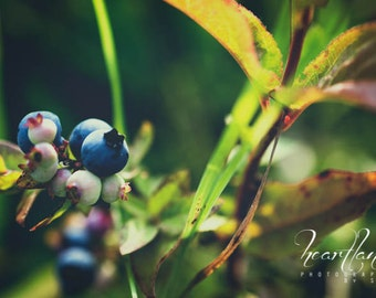Wild Blueberry Photo, Nature Photography, Boundary Waters, Vintage Tones, Minnesota Prints, Kitchen Wall Art, Fine Art Photography, Green