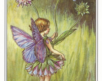 Scabious Fairy Cicely Mary Barker Flower Fairies Vintage Print 1995 Wall Art Nursery Decor Fairy Print Home Decor Print Fine Art