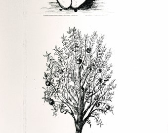 Apple/ Tree Original Intaglio Print