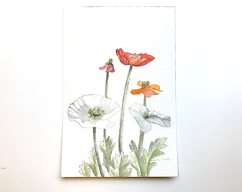 original watercolor painting of poppies