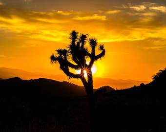 Joshua Tree at Sundown