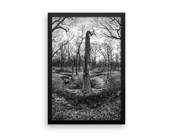 Trees of Antipodes I