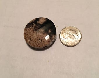 Reduced Fossilized Indonesian Coral Bead