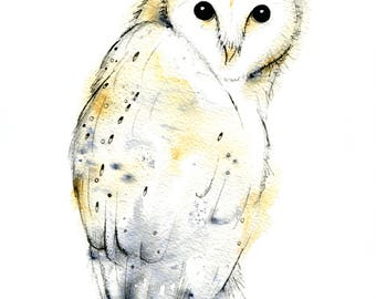Limited edition print - Barn Owl print, owl print, watercolour