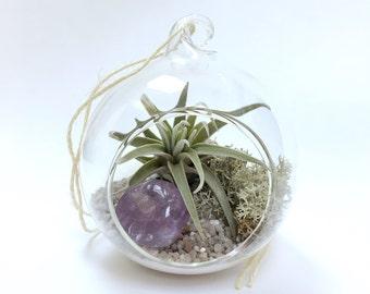 Aquarius February Amethyst Air Plant Garden Kit • terrarium tillandsia birthstone crystal birthday personalize gift diy present decor