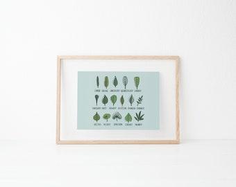 Ebook pdf download botanical line drawing cactus succulent leaf taxonomy illustration wall decor botanical line drawing fandeluxe Image collections