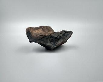 Tyrannosaurus rex Bone Shard Fossil
