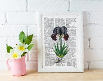 Vintage Book Print Dictionary or Encyclopedia Page Print- Book Iris Plant Botanical studio print on Dictionary BFL067