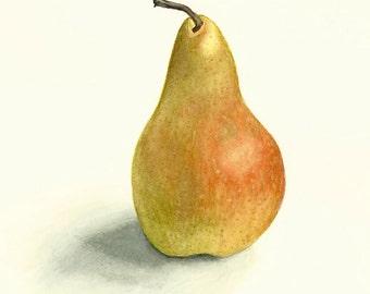 Original Realistic Pear Watercolor Digital Print 6x8 on Acid Free Paper