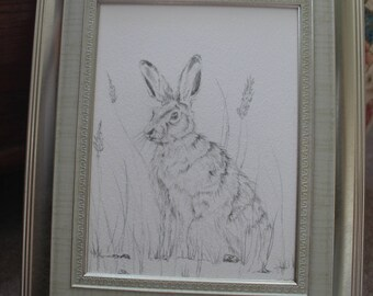 Hare pencil drawing, framed