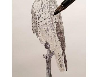 Red Tailed Hawk Watercolor Digital Print