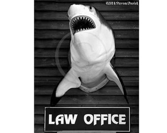 Law lawyer, attorney, shark humor, 16x24 Canvas Art Print