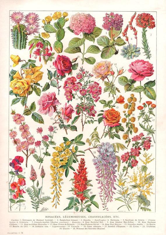 Botanical Illustration Vintage Wall Art