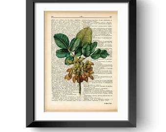Pistachio nut print-Kitchen wall art-Pistachio dictionary print-Pistachio book art-botanical print-home decor-rustic print-NATURAPICTA-DP173