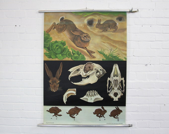 Wall Chart Of The Hare By Jung Koch Quentell