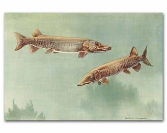 "Lake House Decor, 1930s Fish Art, Vintage Fishing Print --- ""Lake Muskellunge"" No. 140"